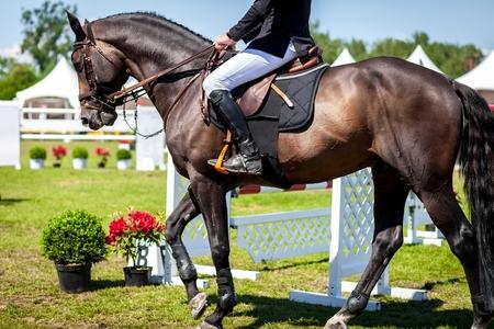 Sport Equestri, Ippico, Salto ostacoli, equitazione foto a tema