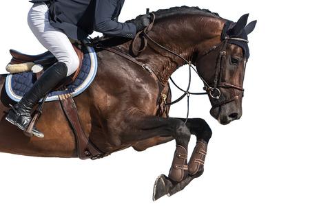 caballo saltando: Deporte ecuestre, caballo de salto de eventos, aislado en el fondo blanco Foto de archivo