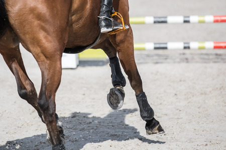 Equestrian Sports, Horse Jumping Stock Photo