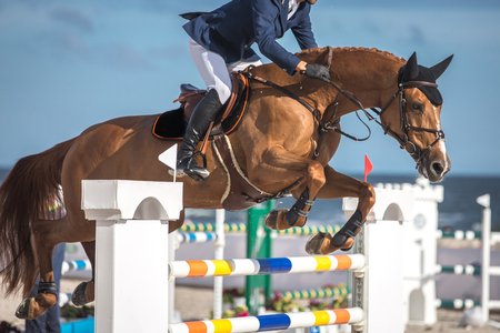 Equestrian Sports, Horse Jumping Standard-Bild