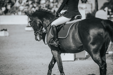 Equestrian Sports, Horse Jumping Event, Show Jumping Competition