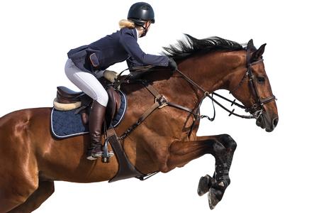 승마 스포츠, 말 점프 이벤트, 흰색 배경에 고립 스톡 콘텐츠 - 84106090