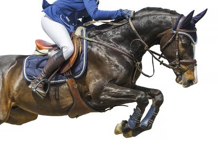 Sports équestres, événement de saut à cheval, isolé sur fond blanc