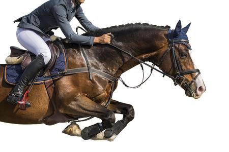 Pferdesport, Springreiten, isoliert auf weißem Hintergrund