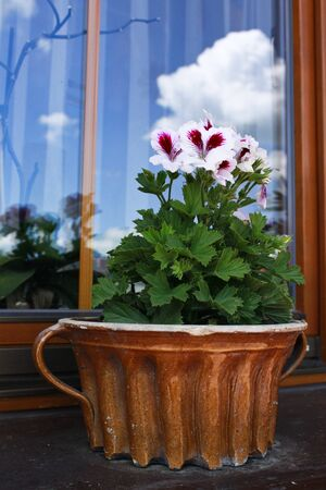 Fower in a decorative pot on the window. Flowers theme, wallpaper, nature, sunny day, decoration