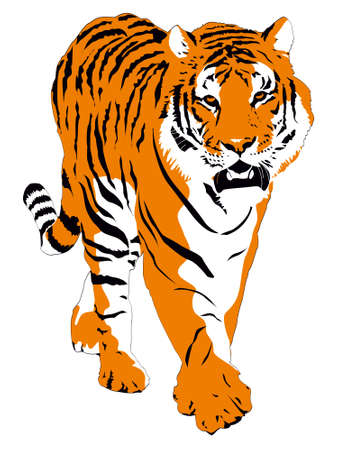 Vector illustration of bengal tiger isolated on white