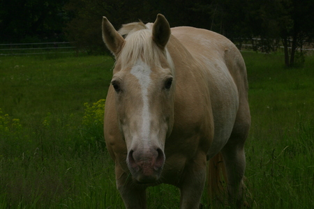 filly: Horse Stock Photo