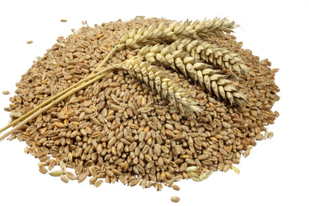 Wheat grains and cereals spike  Wheat isolated on white background