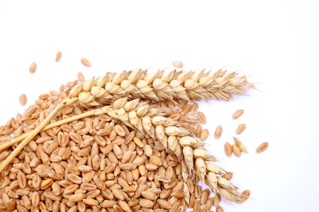 Wheat grains and cereals spike