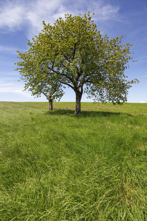 Field,trees and blue sky in spring photo
