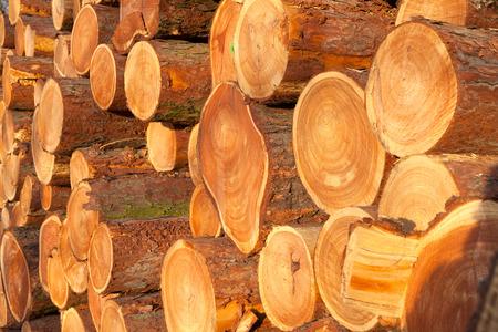 fondo legno: