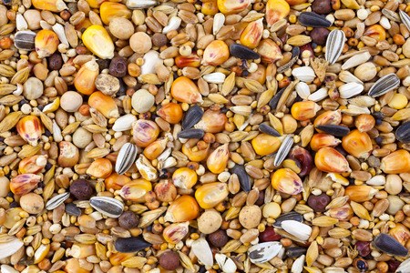 a seed: Mixed bird seed close up Stock Photo
