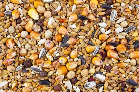 Mixed bird seed close up Standard-Bild