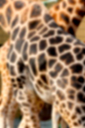 on ear: Foto abstracta que muestra una piel de la jirafa para un fondo Foto de archivo