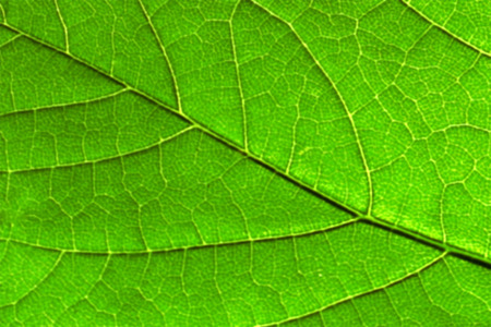 tropical tree: Abstract grean leaf. Natural background.