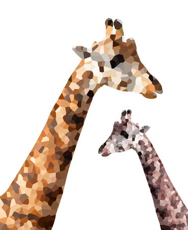 camelopardalis: Giraffes isolated on white background