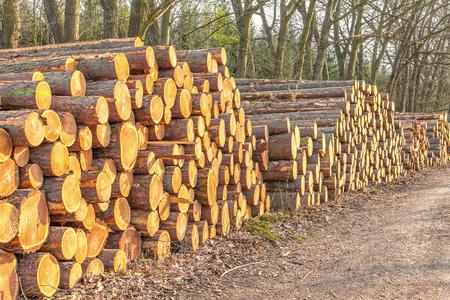 Wooden logs Zdjęcie Seryjne