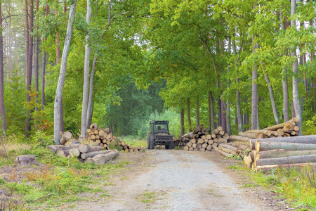 A large pile of logs in a forest road. Forestry.