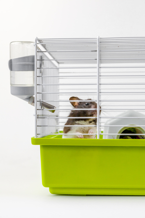 Hamster in cage on white background