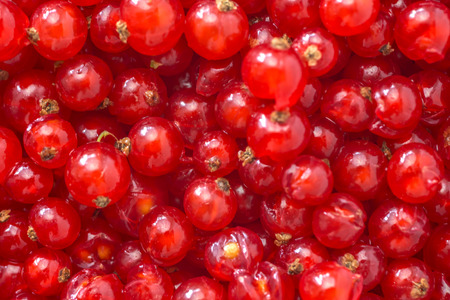 Natural background of a red currant Stock Photo