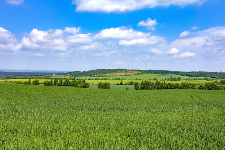 Green field with trees.Spring rural landscape.