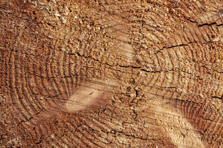Slice of wood as natural background Stock Photo