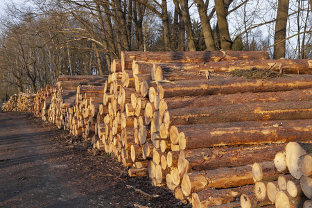 A pile of wood arranged along a forest road.