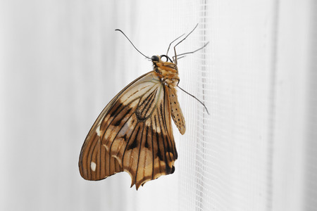 Tropical butterfly on the wall