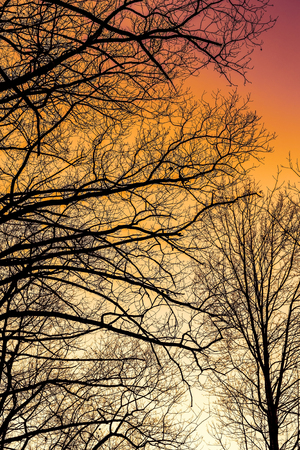 Silhouette of tree branches with colorful sunset sky. Nature background.