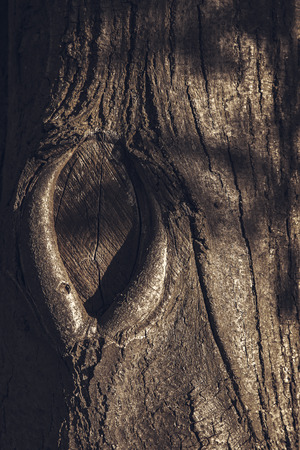 Embossed texture of the brown bark of a tree
