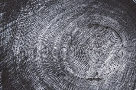 Close up cross section of tree trunk showing growth rings, texture Stockfoto