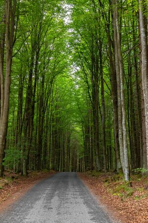 Country road in forest, Sumava National Park, Czech republic