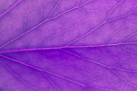 Purple leaf as natural background