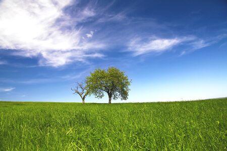 Spring landscape, trees  blue sky