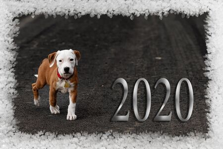 Cute puppy crossbreed dog is the symbol of the coming year 2020. Happy new year 2020 greeting card