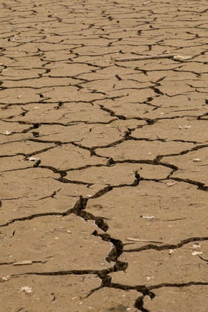 Dry ground as background. The concept of thirst, dehydration.