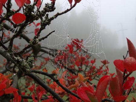 Spider web on autumn tree
