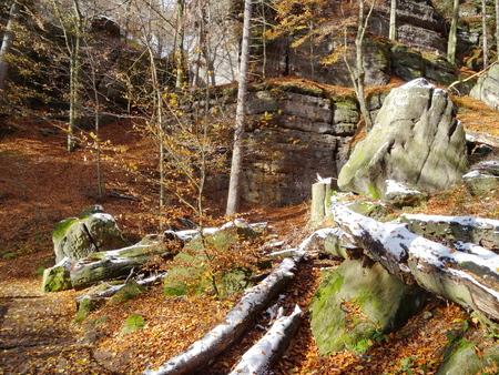 czech switzerland: Forest near Pravcicka brana with fallen leaves on ground, National park Bohemian Switzerland, Czech republic Archivio Fotografico