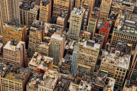New York City birds view detail