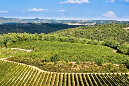 wine road: Tuscan fields, vineyards and woods Stock Photo