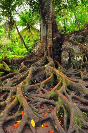 arbol raices: Bosque de árboles con raíces y hojas