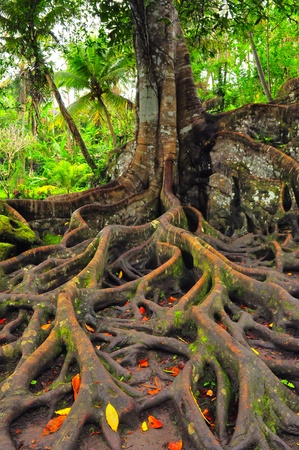 Forest tree with roots and leaves