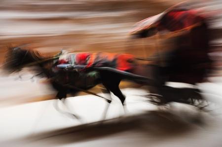 panning: Running donkey carriage panning Stock Photo