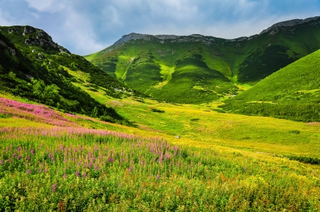 Mountain green meadow with wild flowers in High Tatras, Slovakia