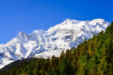 Himalayas mountain peak view of Annapurna II with trees in foreground, Nepal Stock Photo - 19752122