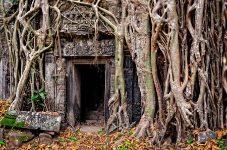 古代石造りの寺院のドア、木の根、アンコール ワット、カンボジア