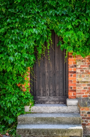 Vintage wooden doors in brick wall covered with green plant leaves