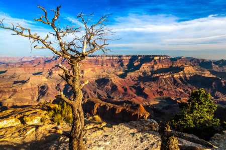 Landscape view of Grand canyon with dry tree in foreground, Arizona, USA 写真素材