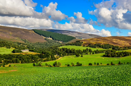 highland region: Scenic landscape view of Scottish highlands meadows near Cairngnorms NP, United Kingdom Stock Photo