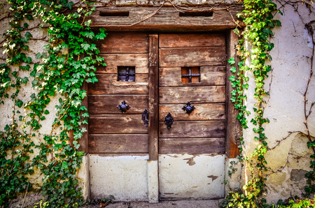 Old wooden textured door and weathered wall with ivy photo